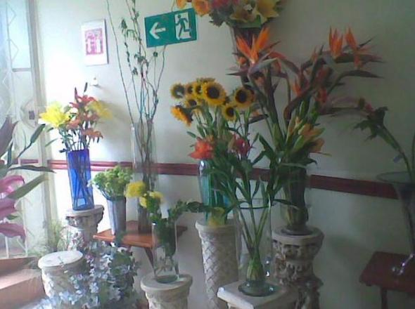 Cattleya Flower Shop in Livepuntamita
