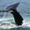 We're having a Whale of a Time…Humpback Season is Here!