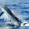Riviera Nayarit International Tuna & Marlin Fishing Tournament