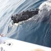 The whales are here! Humpbacks return to Punta Mita!