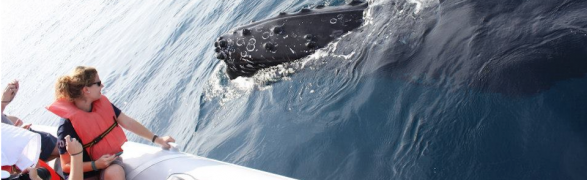 The whales are here! Humpbacks return to Punta Mita!