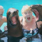 Sea Lion Encounter - Vallarta Adventures