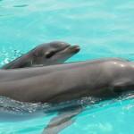 Shany teaching Lulu how to swim and breath