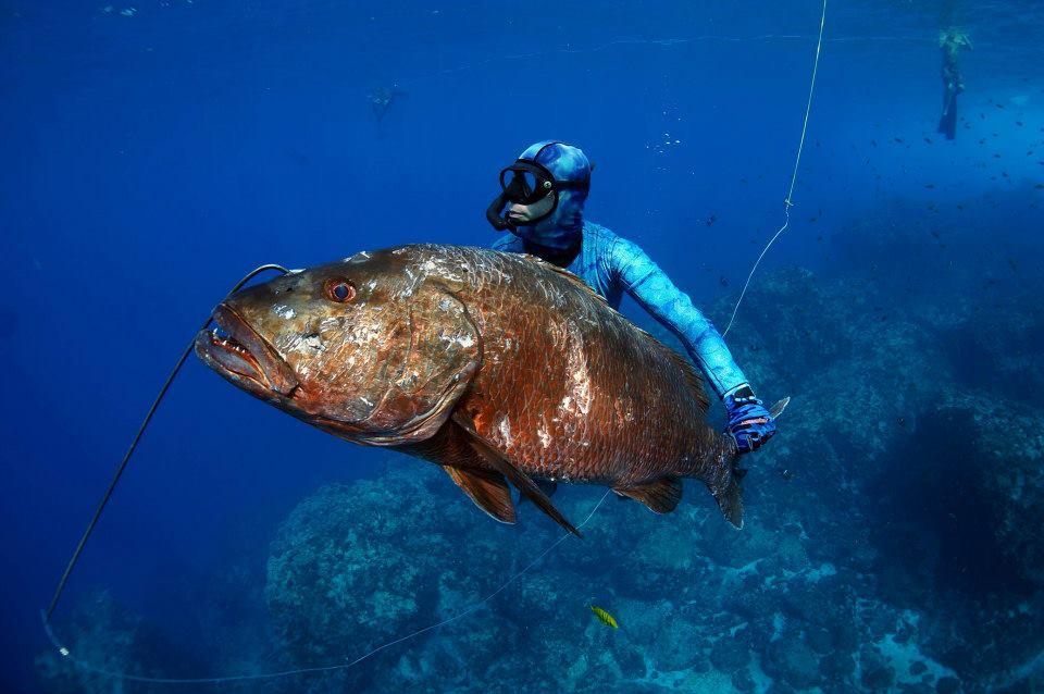 Spearfishing punta mita amazing experience for Punta mita fishing