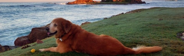 Organic Select on acupuncture & healthy diet tips for our pets!