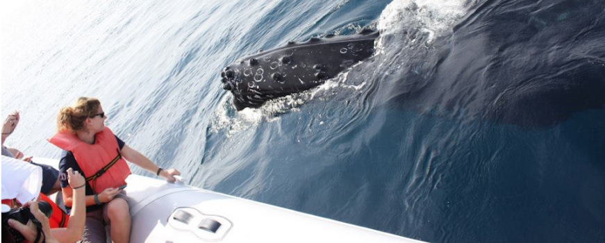 "<a href=""https://livepuntamita.com/the-whales-are-here-humpbacks-return-to-punta-mita/""><b>The whales are here! Humpbacks return to Punta Mita!</b></a><p>One of the most amazing experiences you can live when visiting Punta Mita in winter is whale watching. Year after year, hundreds of humpback whales return to our shores and waters, offering a singular experience of watching them in their natural habitat… </p>"