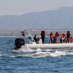 Whale Watching - Vallarta Adventures